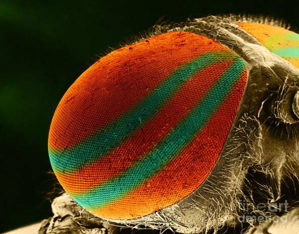 Photograph - Horsefly Eye Sem by Biophoto Associates