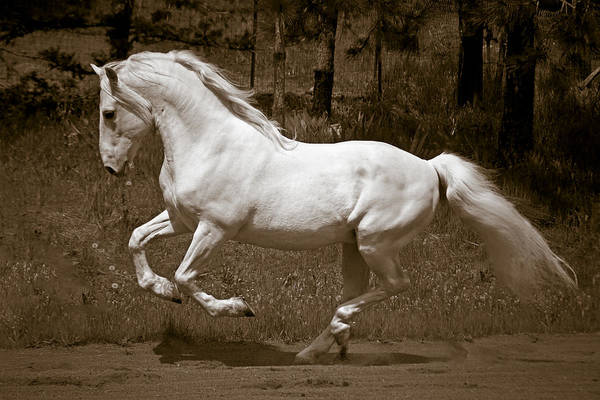 Photograph - Horsepower by Wes and Dotty Weber