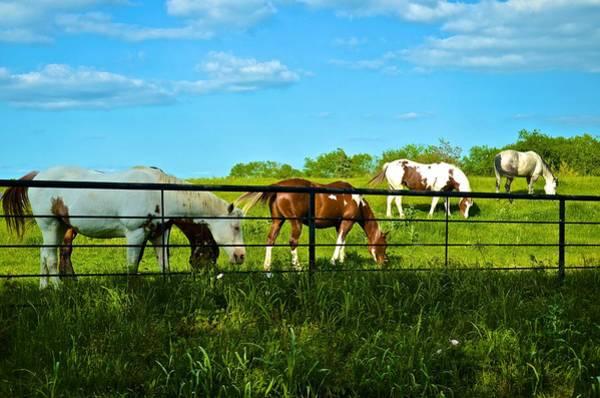 Photograph - Horses 4 by Ricardo J Ruiz de Porras