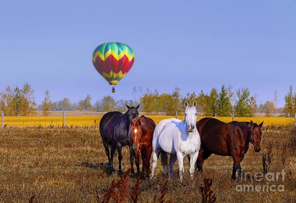 Canada Wall Art - Photograph - Horses And Air Balloon by Viktor Birkus