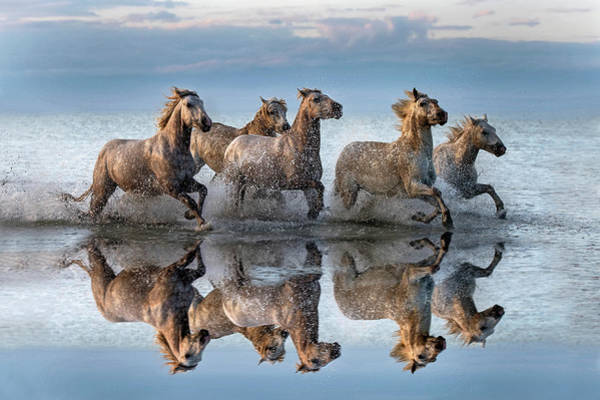 Herd Photograph - Horses And Reflection by Xavier Ortega