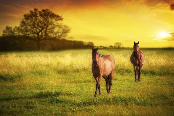 Moorland Photograph - Horses At Sunset by Amanda Elwell