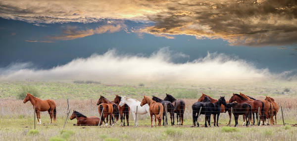 Fences Wall Art - Photograph - Horses by Chechi Peinado