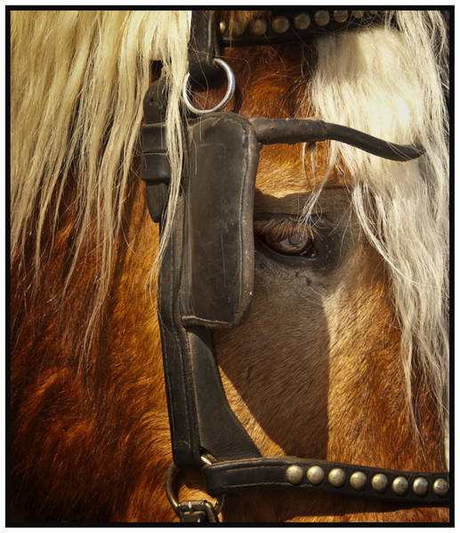 Photograph - Horses Eye by Barry Weiss