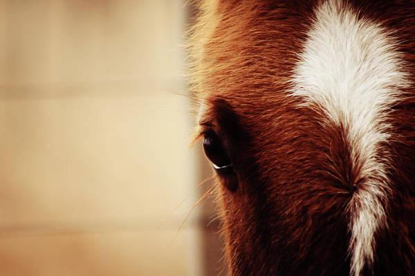 Horse Eye Art for Sale