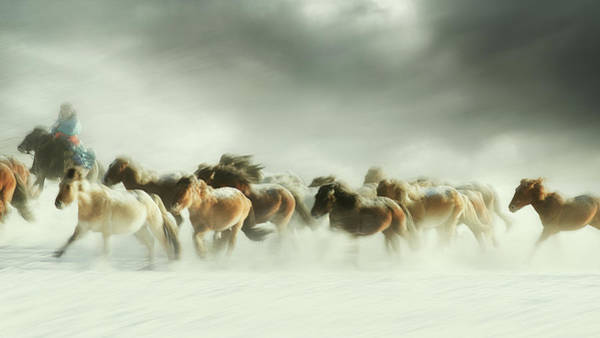 Herd Photograph - Horses Gallop by Shu-guang Yang