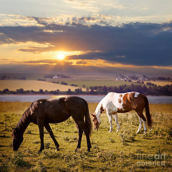 Wall Art - Photograph - Horses Grazing At Sunset by Elena Elisseeva