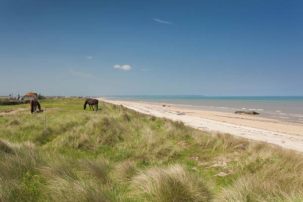 Working Animals Photograph - Horses Grazing By The Beach, Utah by Animal Images