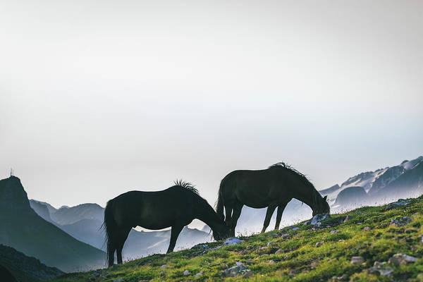 Grazing Photograph - Horses Grazing, Dolomites by Deimagine