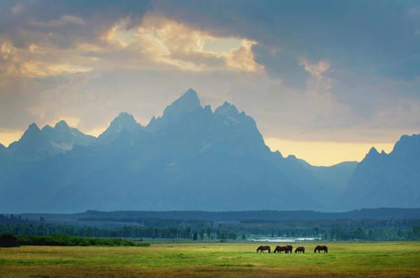 Grazing Photograph - Horses Grazing Grand Teton National by Alan Majchrowicz