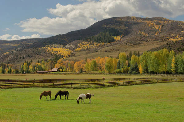 Painted Horses Photograph - Horses Grazing In Autumn Pasture by Chapin31