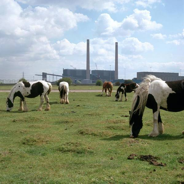 Juxtaposition Photograph - Horses Grazing Near A Power Station by Robert Brook/science Photo Library
