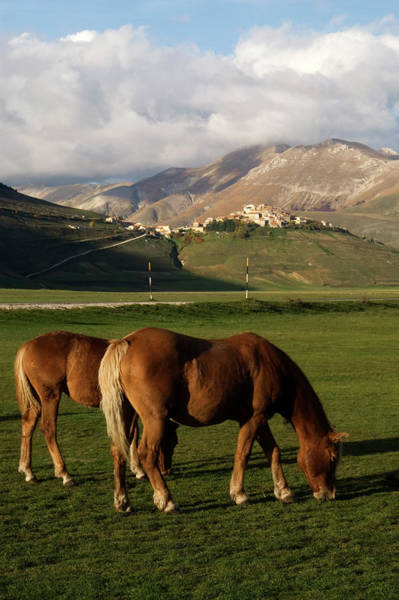 Grazing Photograph - Horses Grazing On Meadow With Town And by Diana Mayfield