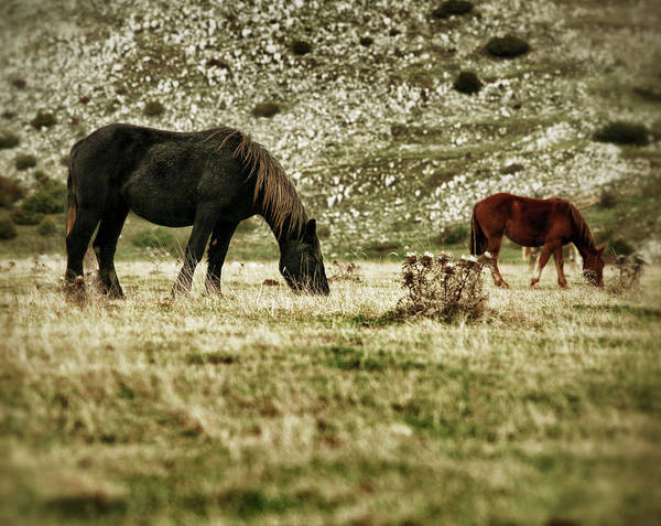 Grazing Photograph - Horses Grazing by Piola666