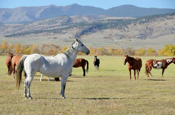 Grazing Photograph - Horses Grazing by Rivernorthphotography
