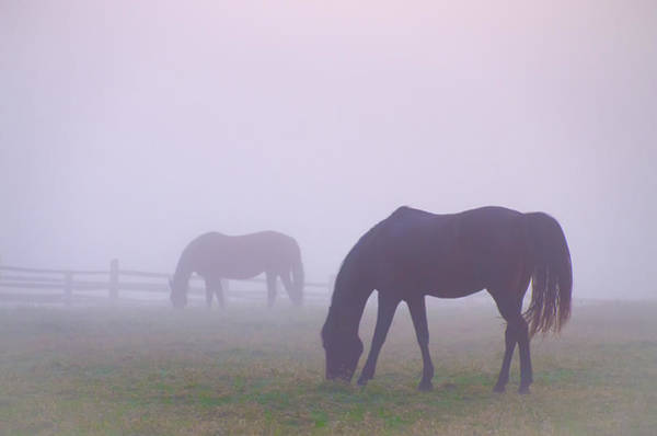 Wall Art - Photograph - Horses In A Fog by Bill Cannon