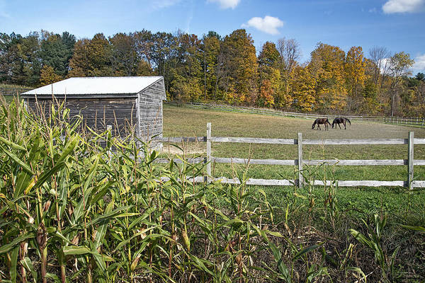 Voorheesville Photograph - Horses In Autumn Pasture by Ray Summers Photography