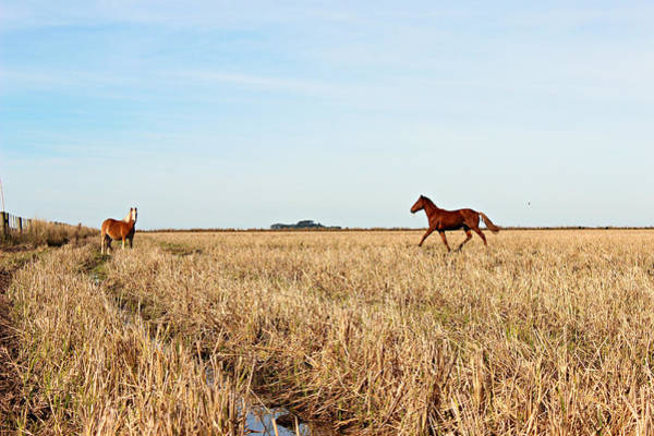 Mare Photograph - Horses In Harvested Rice Fields by Lelia Valduga