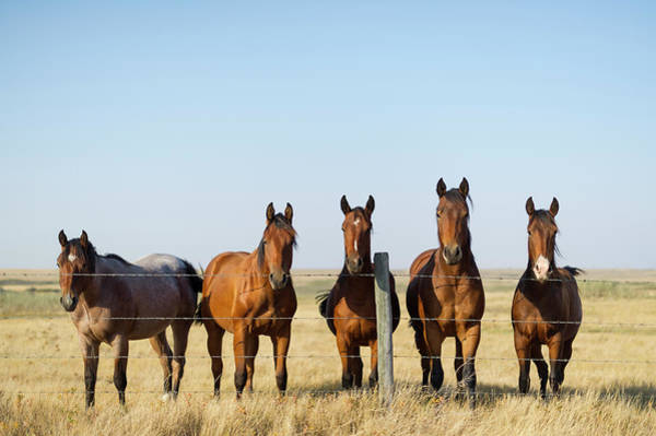 Herd Of Horses Wall Art - Photograph - Horses In Pasture In Autumn by Chris Hendrickson