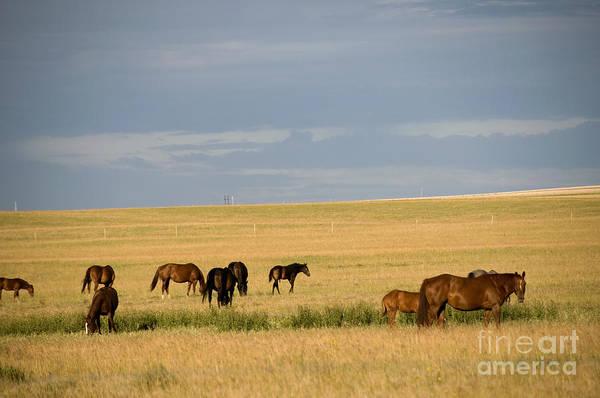 Photograph - Horses In Saskatchewan by Mark Newman