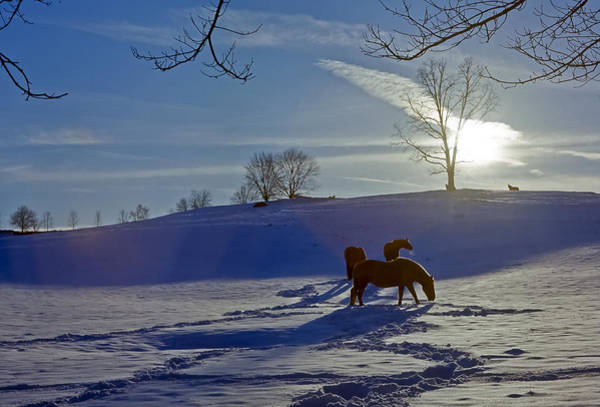 Horses In Snow Art Print