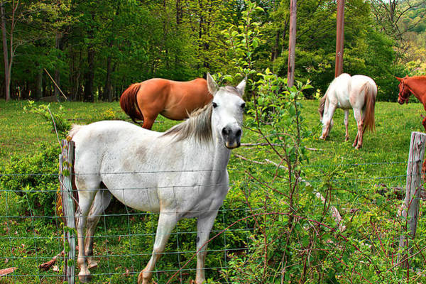 Photograph - Horses In The Field by Mary Almond