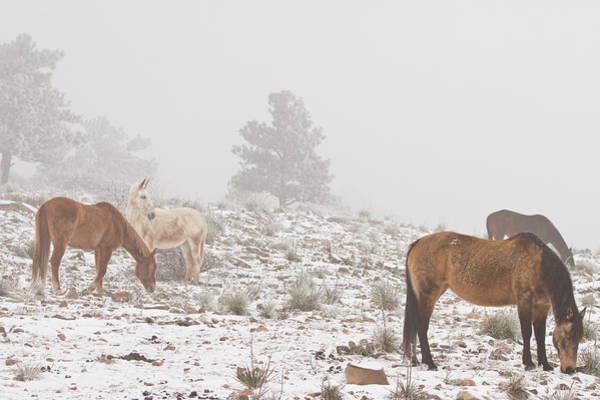 Photograph - Horses In The Winter Snow And Fog by James BO Insogna