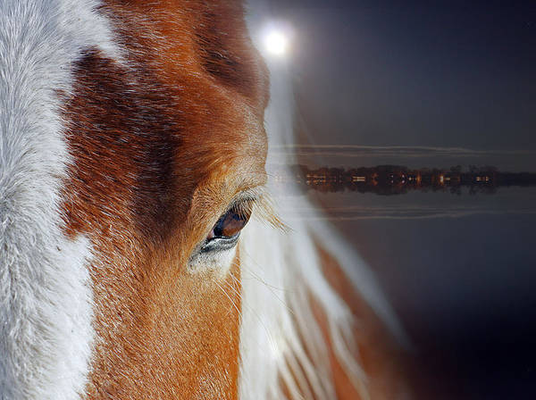 Wall Art - Photograph - Horses  by Mark Ashkenazi