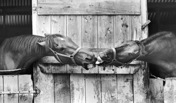 Wall Art - Photograph - Horses Meeting At A Fair by Ulrike Welsch