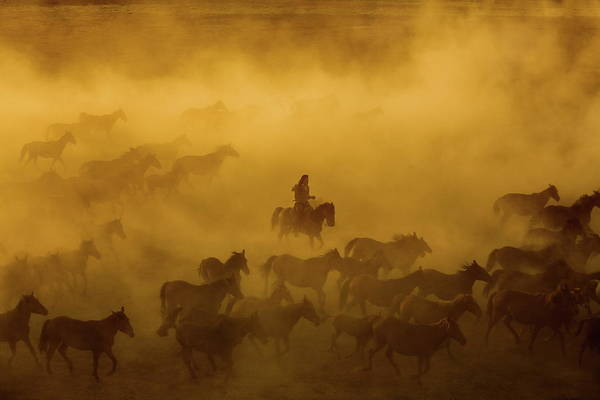 Cowboy Photograph - Horses by ?mm? Nisan