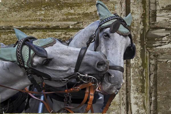 Wall Art - Photograph - Horses Of Vienna by Enrico Mariotti