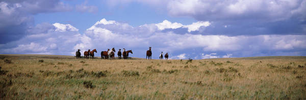 Wall Art - Photograph - Horses On A Landscape, East Glacier by Animal Images