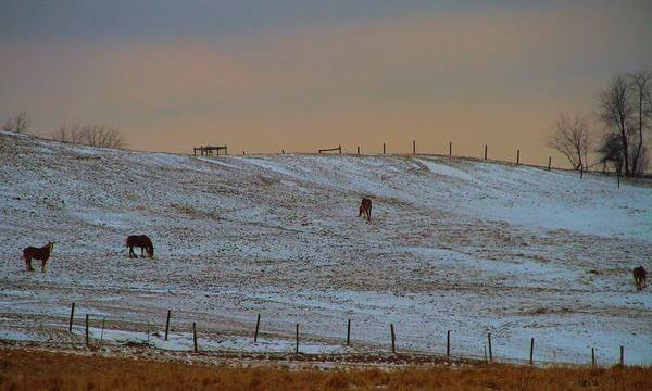 Horse Farm Photograph - Horses On The Farm In Winter by Dan Sproul