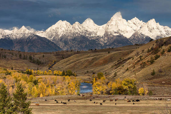 Wall Art - Photograph - Horses On The Gros Ventre River by Kathleen Bishop