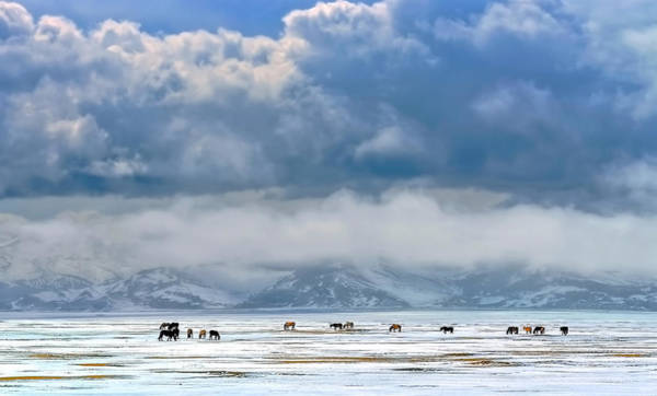 Plain Wall Art - Photograph - Horses On The Snow by Hua Zhu