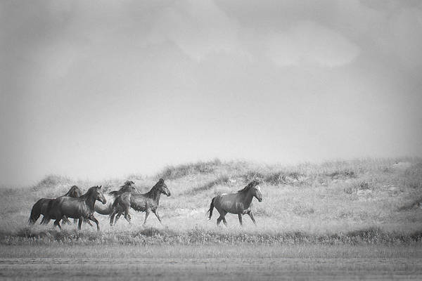 Photograph - Horses Running Wild Running Free by Bob Decker
