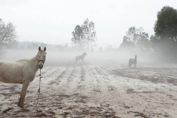 Wall Art - Photograph - Horses Standing In Field by Marcos Ferro
