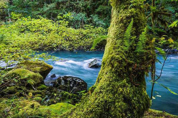 Photograph - Horseshoe Bend Trail Along The Nooksack River by Priya Ghose