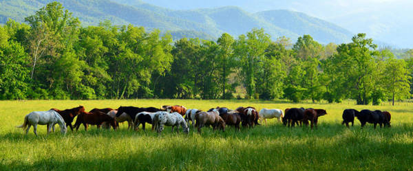 Wall Art - Photograph - Horses Of The Cove by David Lee Thompson