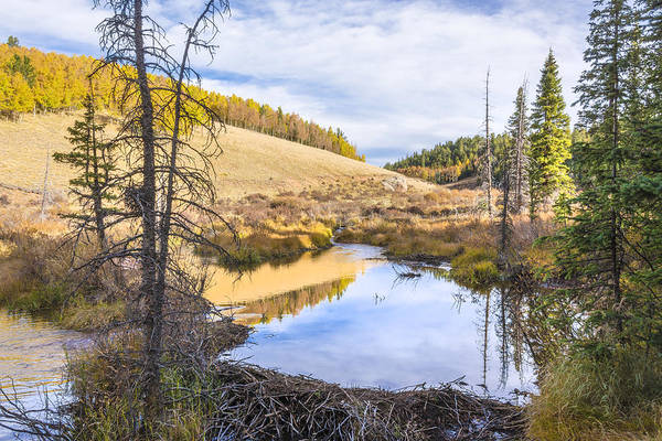 Beaver Pond Wall Art - Photograph - Horsethief Creek Beaver Pond - Cripple Creek Colorado by Brian Harig