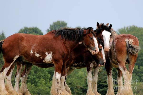 Photograph - Horsie Huddle by Janice Byer