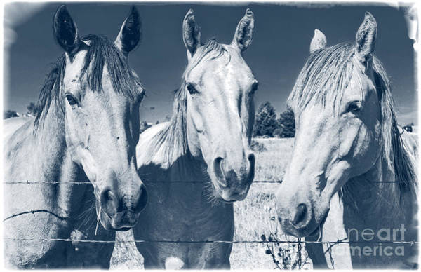 Triplets Photograph - Horsing Around by Edward Fielding