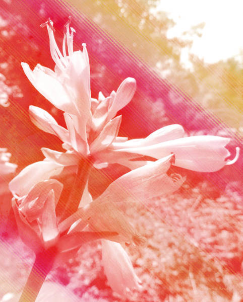 Analogous Color Photograph - Hosta Flower by Shawna Rowe