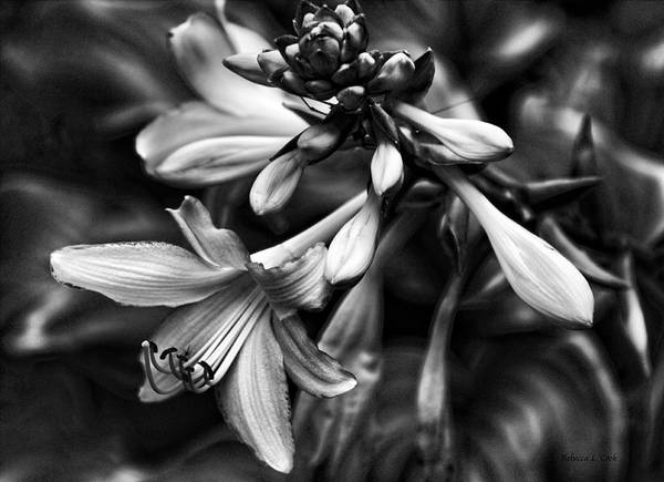 Photograph - Hosta Lilies  by Bellesouth Studio