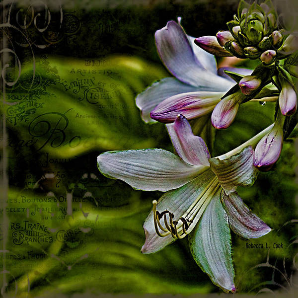 Wall Art - Photograph - Hosta Lilies With Texture by Bellesouth Studio