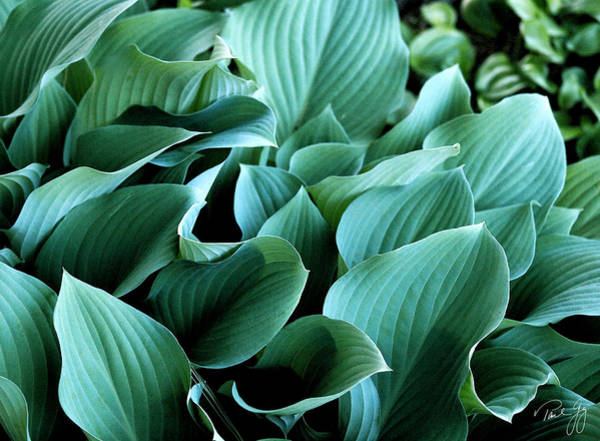 Digital Art - Hostas by Paul Gaj
