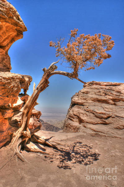 Photograph - Hot And Dry by David Birchall