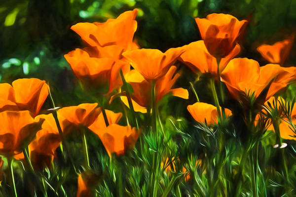 Wild Poppies Digital Art - Hot California Poppies Impression by Georgia Mizuleva