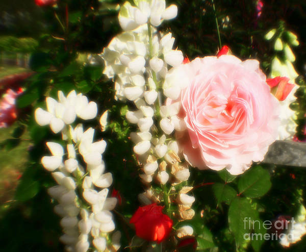 Photograph - Hot Pink Beautiful Roses by Doc Braham