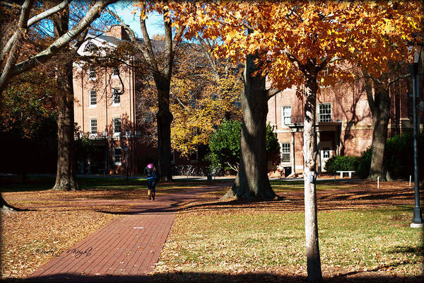 Photograph - Hot Pink Hoodie - Davidson College by Paulette B Wright